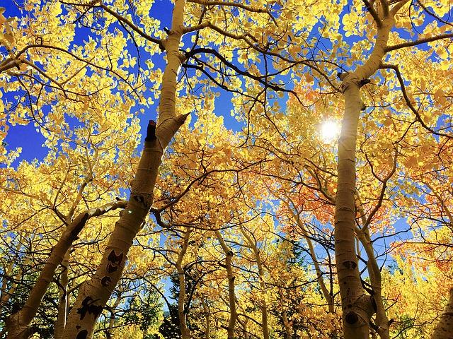 осень фото стихи