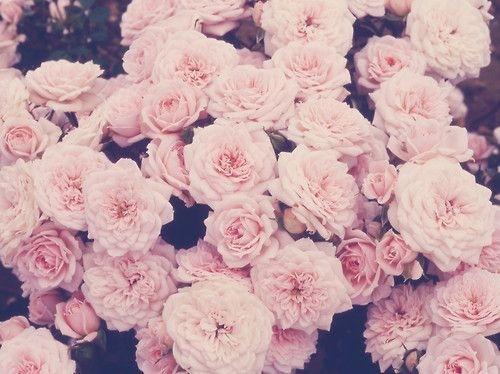 flowers-pink-tumblr-wallpaper-favim-com-2200139